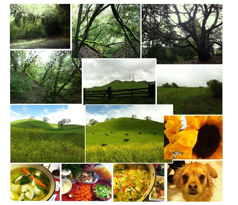 Forestweekend